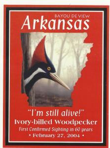 woodpecker post card -2